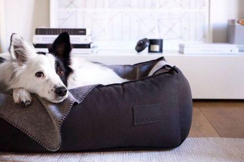 accessori per cani 15 articoli indispensabili da acquistare