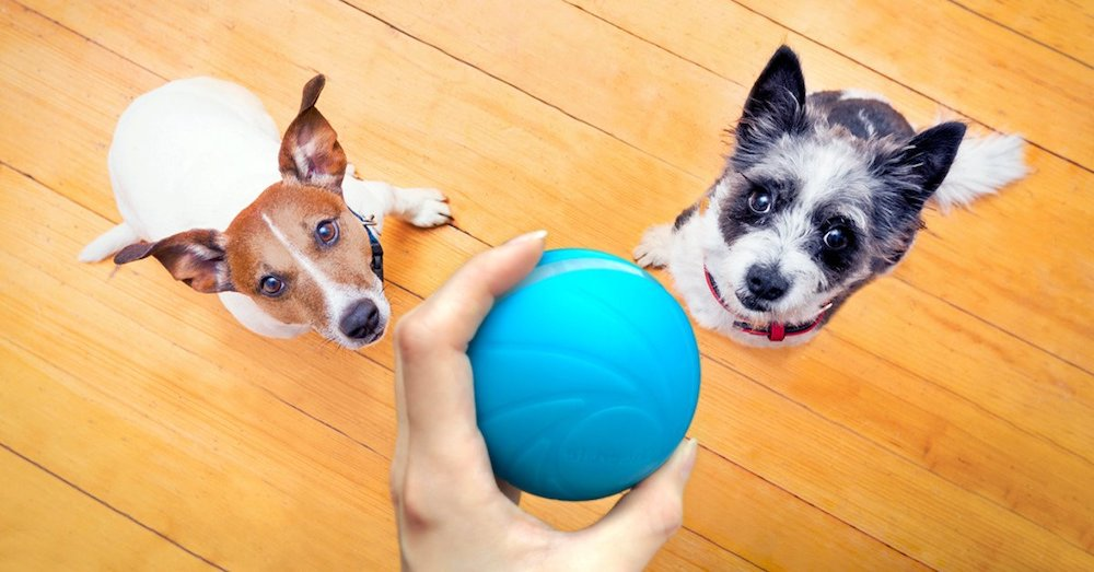giochi-per-il-cane-in-casa