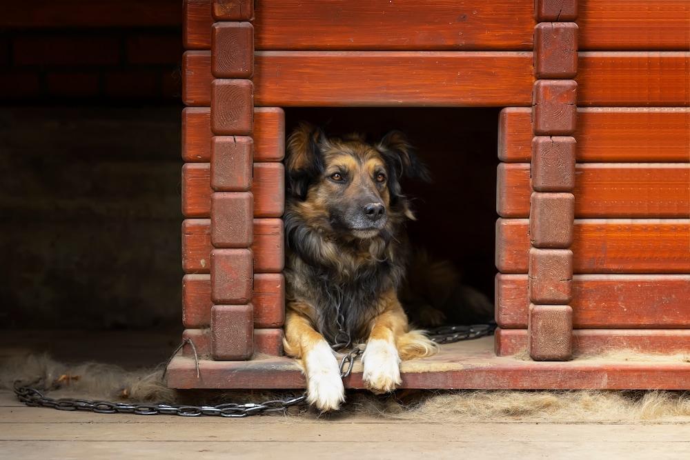 disinfettare cuccia cane