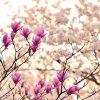 arredare casa in primavera