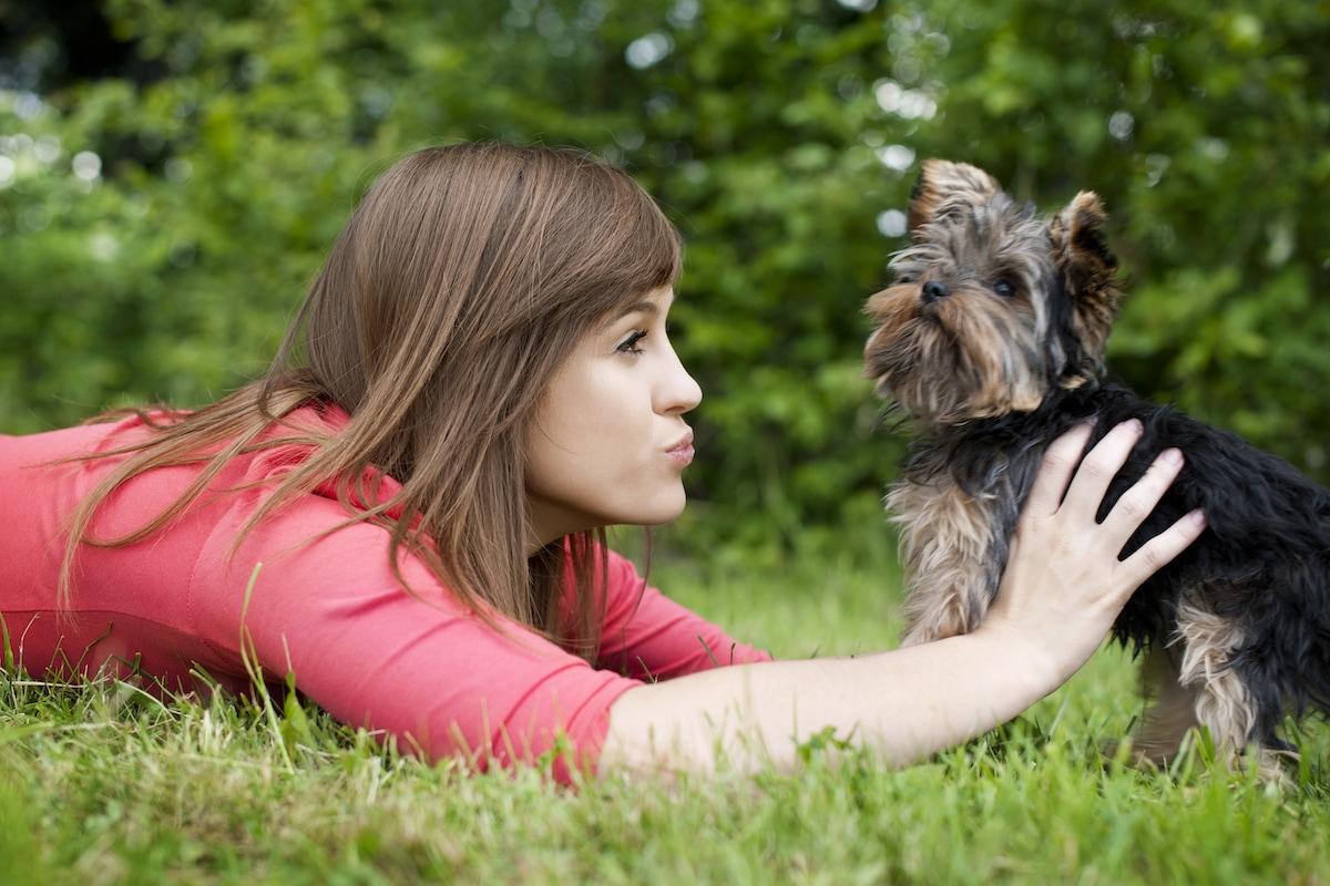 benessere animali estate